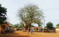 Bei diesem Baobab mussten wir rechts runter