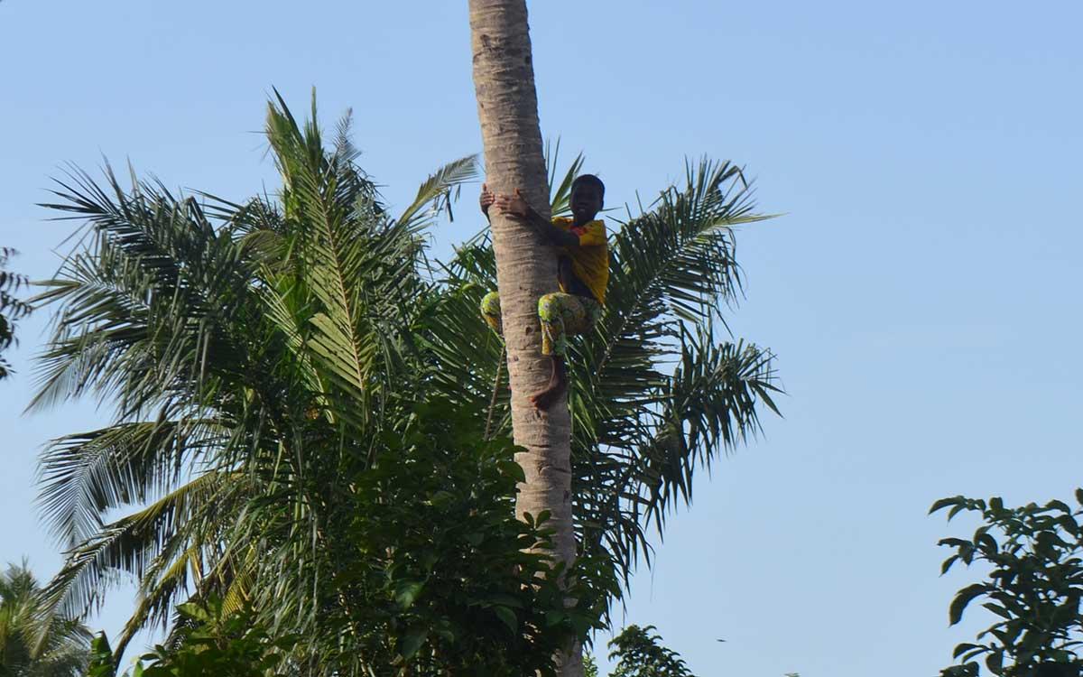 Junge auf Palme